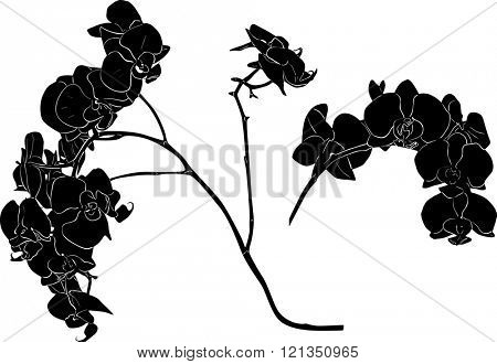 illustration with orchid silhouettes isolated on white background