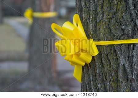 Yellow Ribbon Around An Old Oak Tree 2