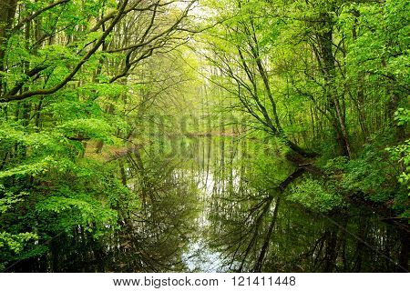 spring in Amsterdamse bos park near Amaterdam