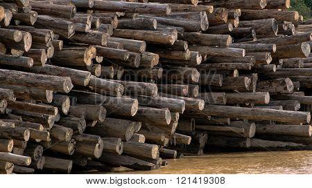 Log Pile In River Sarawak Borneo