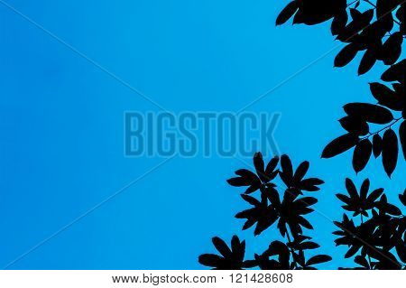 Leaves On Blue Background. Space On Left Side