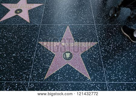 Woody Woodpecker Hollywood Star