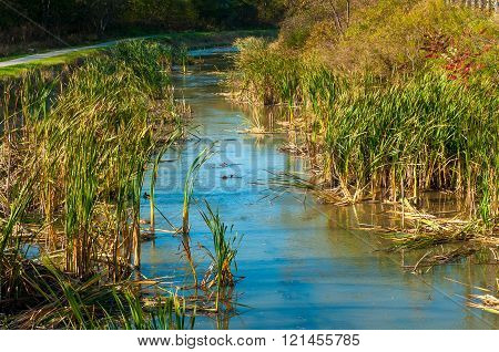 Weedy canal
