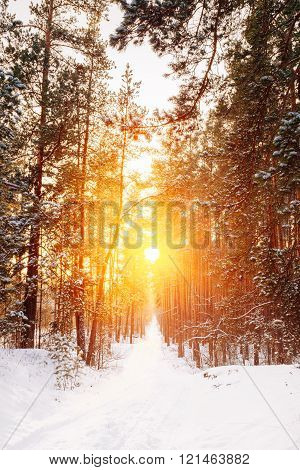 Amazing Beautiful sunset sunrise sun sunshine in sunny winter sn