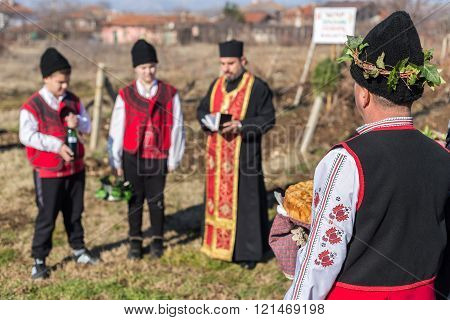 Pruning Of The Vineyards Ritual In Bulgaria