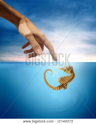 hand touch a Sea horse in the sea