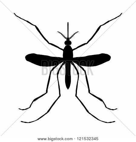 Insect silhouette. Insect. a realistic mosquito. Culex pipiens Mosquito silhouette. Mosquito isolate