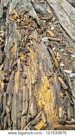 Rotten Plank