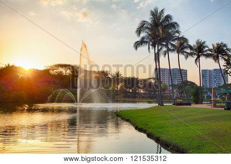 Palm, Lake And Sunset