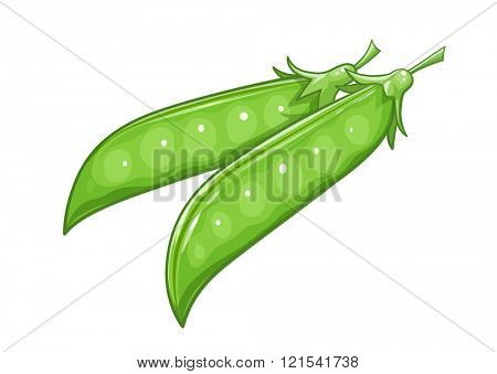 Pods of Pea. Vector illustration. Isolated white background. Transparent objects used for lights and shadows drawing