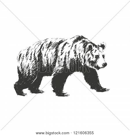 Black And White Engrave Isolated Vector Bear. See Also Other Animals.