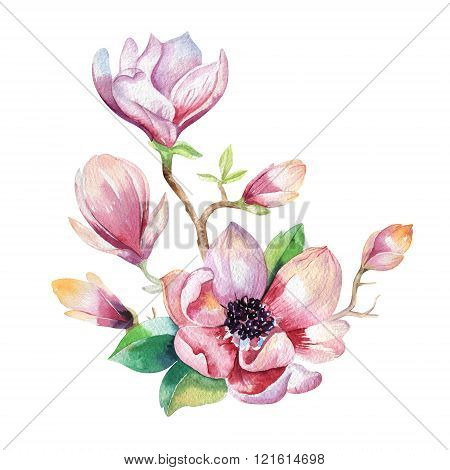 Painting Magnolia Flower. Hand Drawn Watercolor Floral