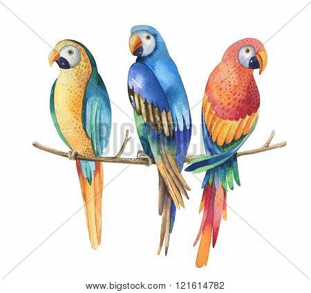 Tropical Watercolor Birds Isolated On White Background. Macaws P