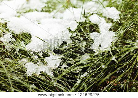 Grass Covered With Snow