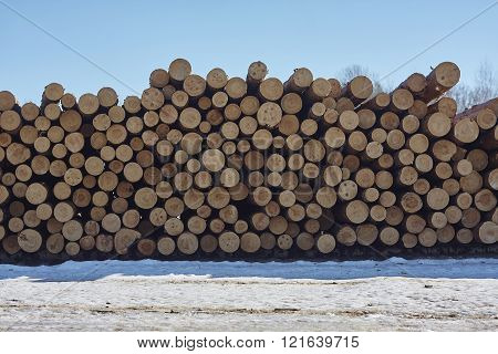 stack of pine tree wood