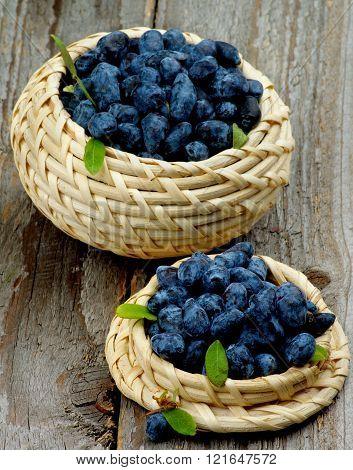 Fresh Honeysuckle Berries