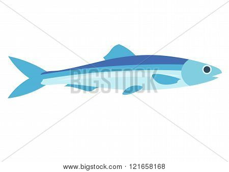 Anchovy vector illustration. Anchovy fish on white background. Anchovy vector. Anchovy illustration.