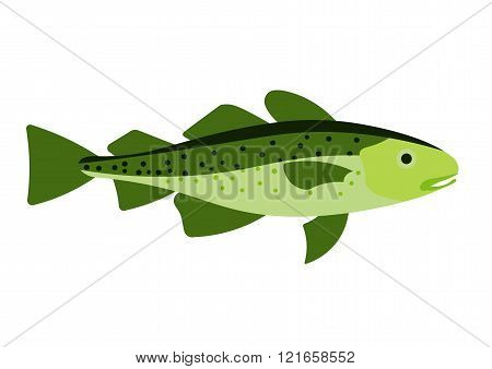 Cod fish vector illustration. Cod fish on white background. Cod fish vector. Cod fish illustration.