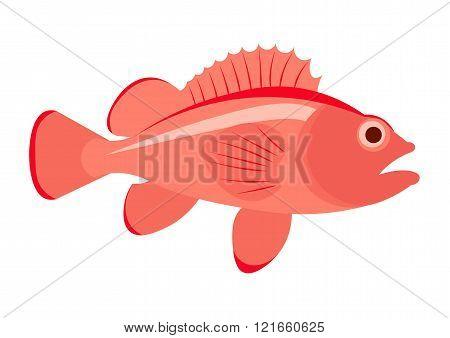 Sea bass fish vector illustration. Sea bass on white background. Sea bass vector. Perch fish illustr