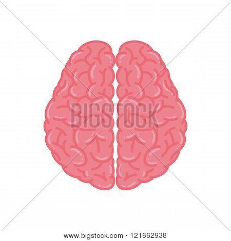 Pink Human Brain