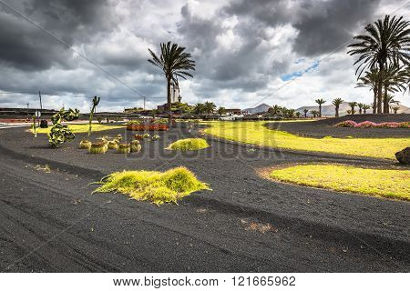 Flowers And Palm Trees On Roundabout Near Yaiza Village, Lanzarote Island, Spain