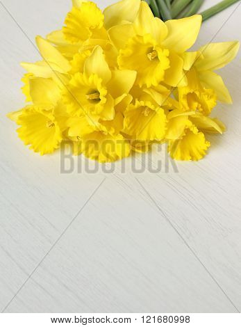 Yellow Narcissus On White Wooden Background As Spring Background