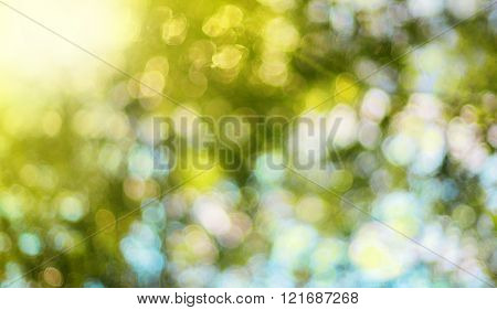 Nature blurred background with bokeh and sun rays