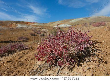 Desert landscape with bushes and sand orange, hot