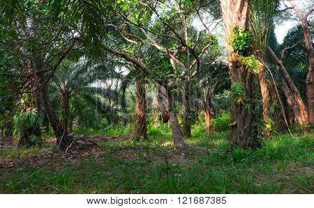 Jungle. Rain forest in Thailand  landscape, jungle