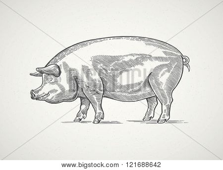 Pig in graphic style. Drawing by hand.