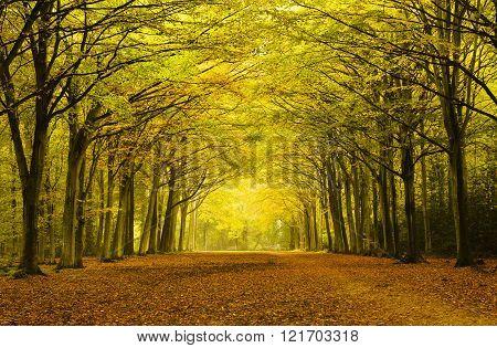 Autumn Arches