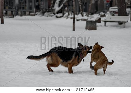 Love fun of two domestic dog in park at winter