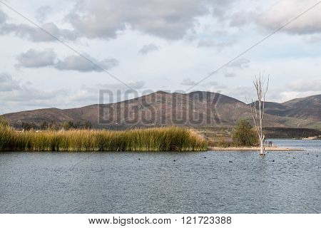Marsh Grass in Lake with Background of Mountains
