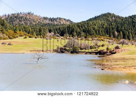Tree In The Lake Karagol Plateau Near Tarakli, Sakarya