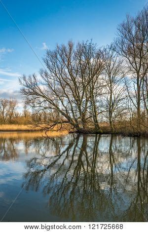 Bare Trees Reflected In The Water Surface