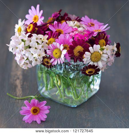 Beautiful daisy flowers