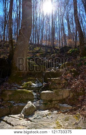 Rocky gully in hardwood forest