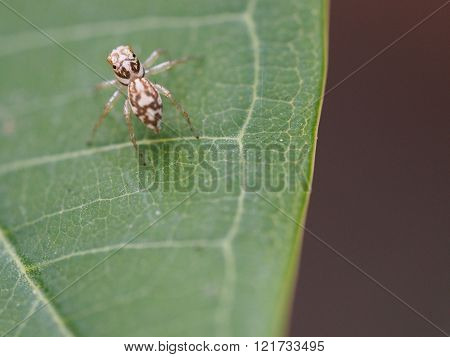 Spider On Green Leaf