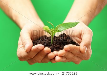 Male hands holding plant and soil on green background