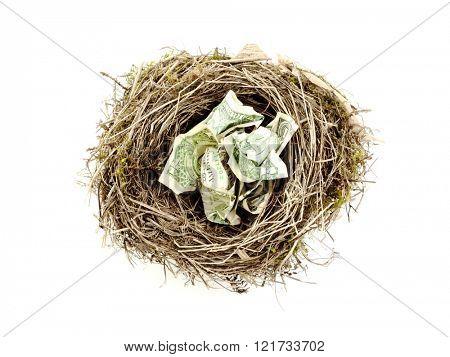 Bird nest with crumpled dollar bills on white background