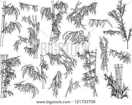 illustration with bamboo collection on white background
