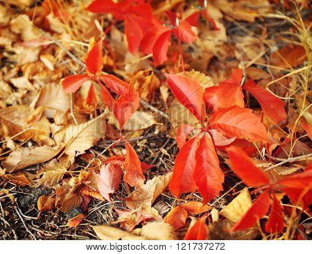 Colourful autumn leaves on the ground in the park, close up