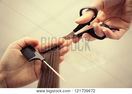 Professional hairdresser cutting clients hair