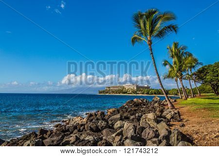 Palm trees near the beautiful coastline in Maui, Hawaii. Colorful blue sky and a resort in the background ** Note: Soft Focus at 100%, best at smaller sizes