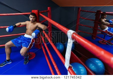 Male boxer resting in the corner of the boxing ring