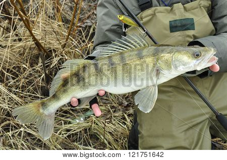 Walleye fishing