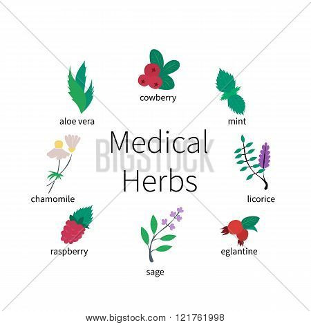 Colorful icon set - medical herbs and berries. Flat vector illustration.