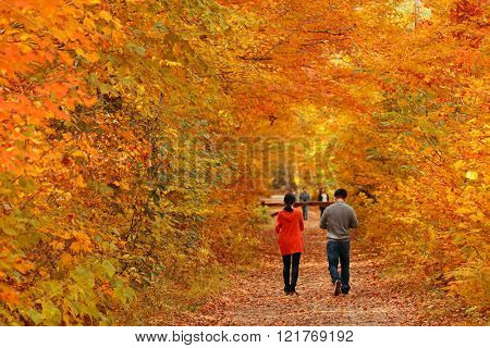 Couple in colorful woods with Autumn foliage in Vermont