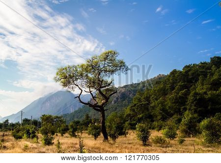 Valley Of The Tree , Grass And Mountains In The Background.