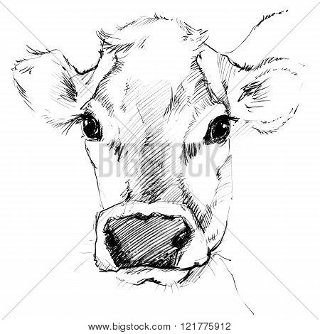 Cow. Cow sketch. Dairy cow pencil sketch. Animal farm